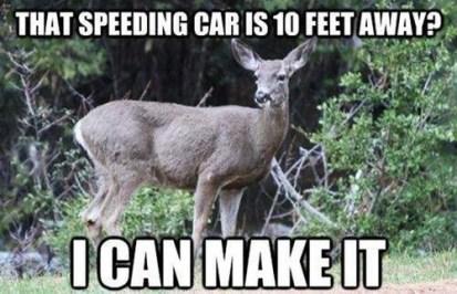 deer-meme